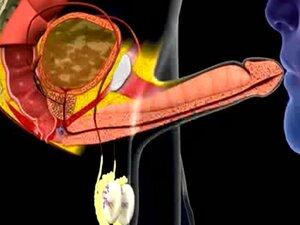 Сперма у уста animacija